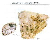 Benefits of TREE AGATE